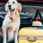 Voyager avec son chien : quelques conseils utiles